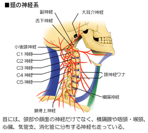 頚髄神経の分布経路
