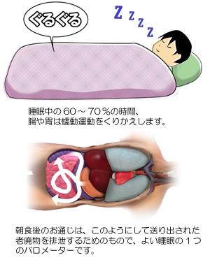 質のよい睡眠と消化管の運動