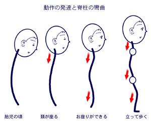 幼児の発達と脊柱の運動能力