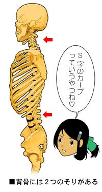 脊柱のS字状彎曲
