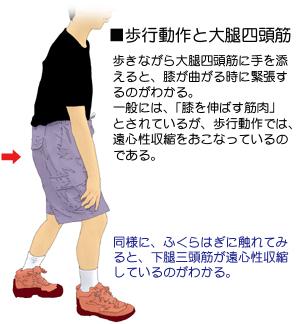 歩行動作とエキセントリック収縮