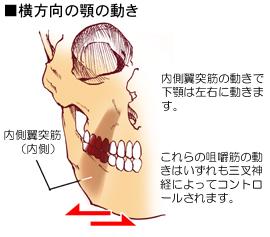 内側翼突筋の付着と作用