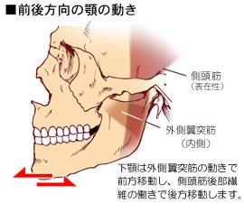 外側翼突筋の付着と作用