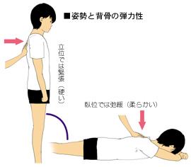 直立姿勢と背骨の弾力性