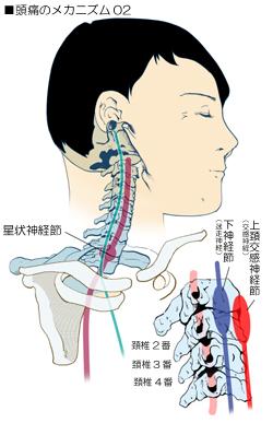 頭痛に関係する頚部の自律神経