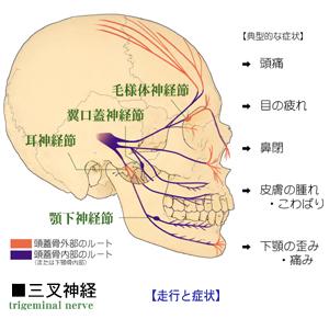 三叉神経の分布と頭部の自律神経症状の関係