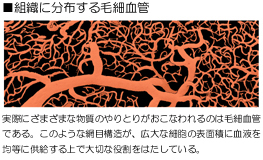 image_jiritusinkei01