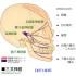 脳神経の引きこす症状について